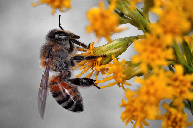 vanishing bees bee deaths crop disaster