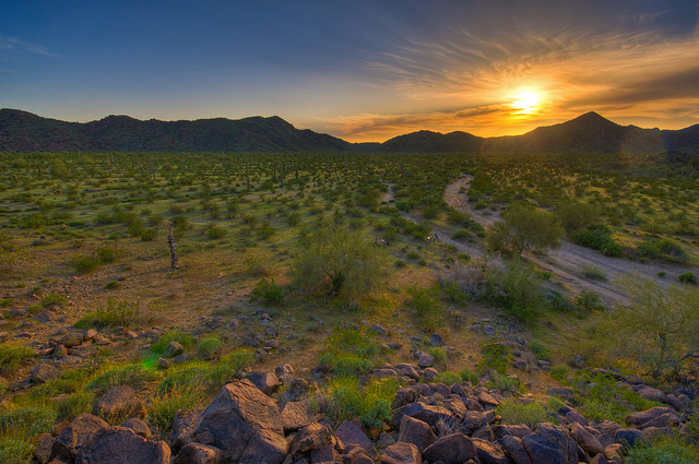 How to Reverse Desertification and Green The World's Deserts -- Video of Allan Savory on Grass-fed Cows