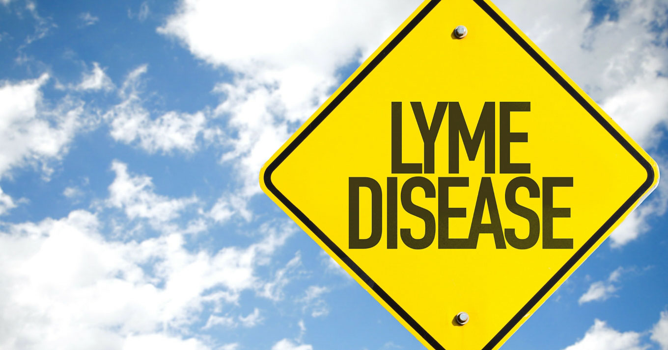 Chronic Lyme: Should You Really Worry? | Food Renegade