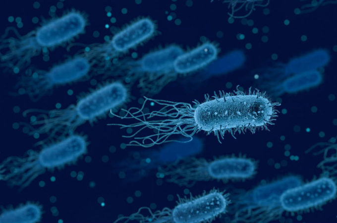 bacteria mind altering mood study